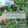四川自贡专业为您提供,发泡陶瓷,耐酸砖,盲道砖,批发厂家